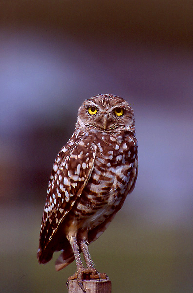 National Geographics: owl pictures